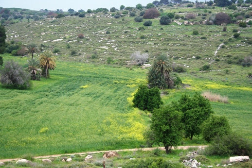 """green revolution in israel India is presently in the midst of its second """"green revolution""""  started in 2008  following the 5 israel-indo cooperation agricultural centers of."""